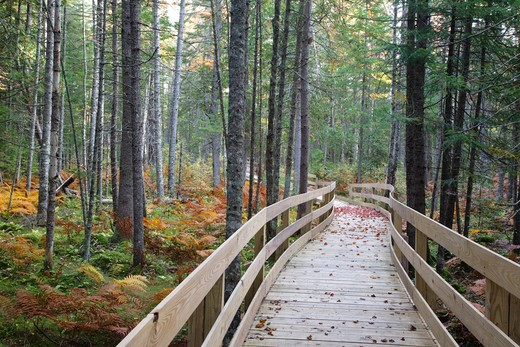 Pondicherry Wildlife Refuge - Mud Pond Trail in Jefferson, New Hampshire USA during the autumn months. : Stock Photo