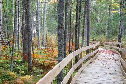 Pondicherry Wildlife Refuge - Mud Pond Trail in Jefferson, New Hampshire USA during the autumn months. : Stock Photo
