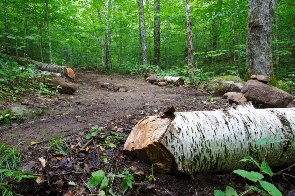 Low impact trail work - Freshly cut blowdown along the Mt Kinsman Trail in the White Mountains, New Hampshire USA : Stock Photo