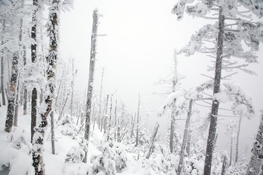 Stock Photo: 1809-3487 Willey Range Trail - Winter