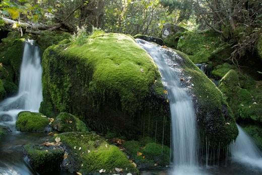 Stock Photo: 1809-5261 Mossy Falls - King Ravine Trail