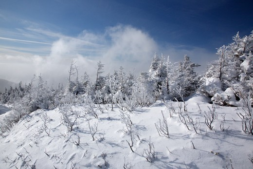 Strong winds blow snow across the valley along the Old Bridle Path during the winter months in the White Mountains, New Hampshire USA : Stock Photo