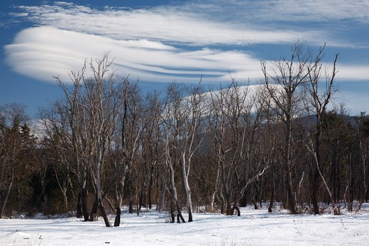 Altocumulus lenticularis clouds over forest along the Kancamagus Highway in the White Mountains, New Hampshire USA : Stock Photo