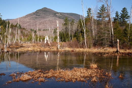 Pemigewasset Wilderness - Wetlands area along the Franconia Brook Trail in Lincoln, New Hampshire USA. The southern end of Owls Head is off in the distance : Stock Photo