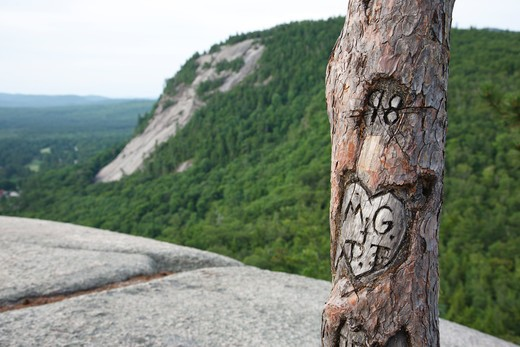 Initials carved in tree at Cathedral Ledge State Park in North Conway,  New Hampshire USA : Stock Photo