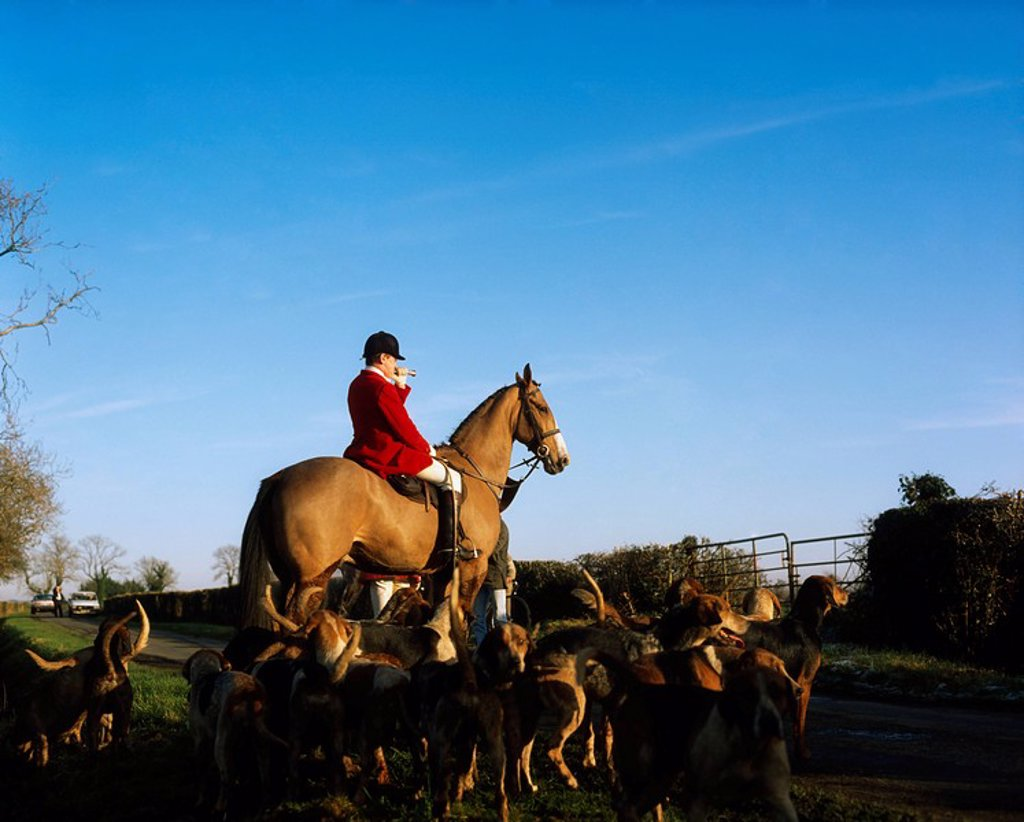 Ward Union Staghounds, Co Meath, Ireland : Stock Photo