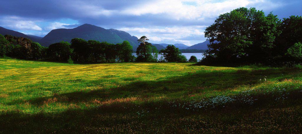 Stock Photo: 1812-15770 Muckross Lake, Killarney National Park, Co Kerry, Ireland