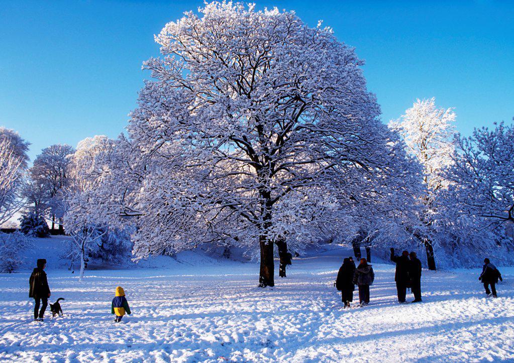 Winter Scene In Ormeau Park, Belfast, Ireland : Stock Photo
