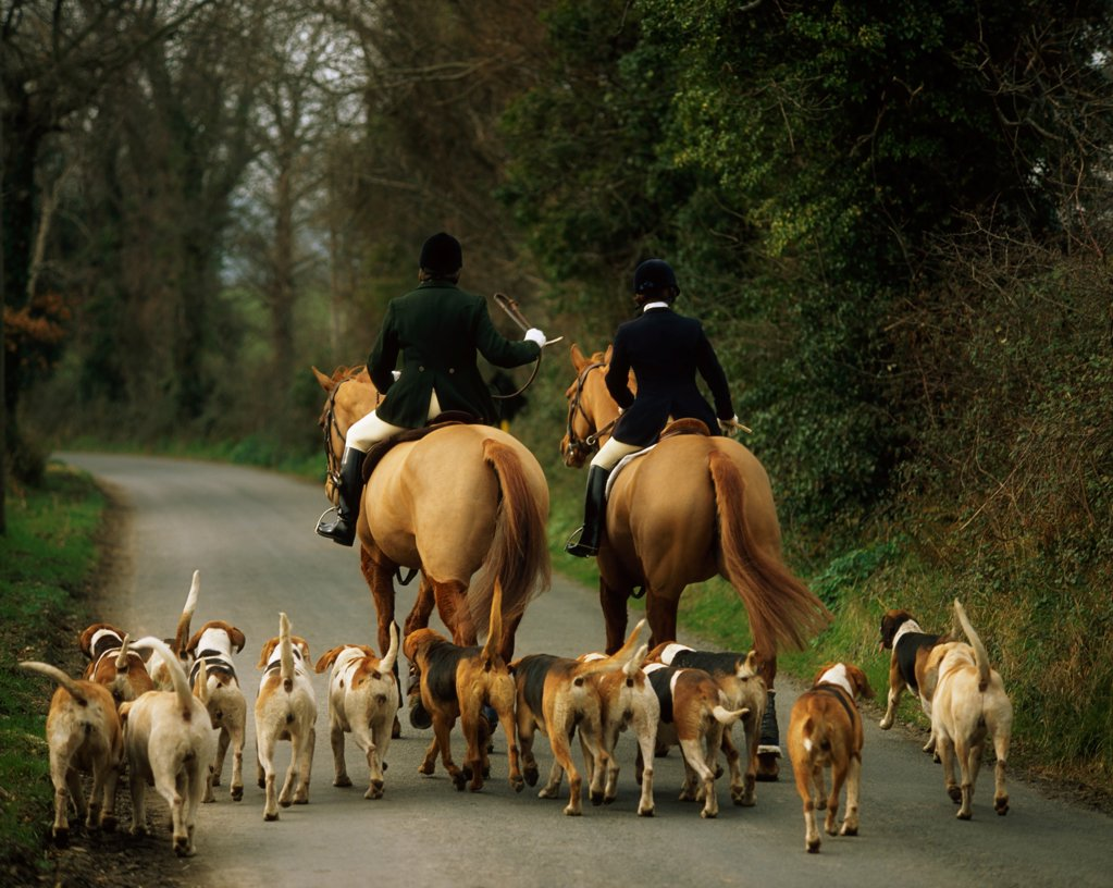 Stock Photo: 1812-16116 The Bray Harriers, Co Wicklow, Ireland
