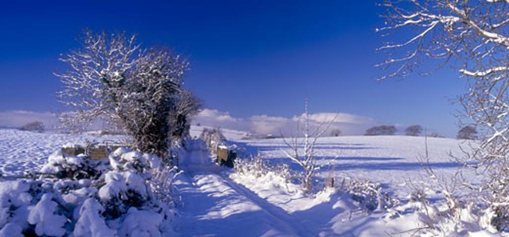 Stock Photo: 1812-1666 Snowbound Lane, Near Burt Castle, Co Donegal, Ireland