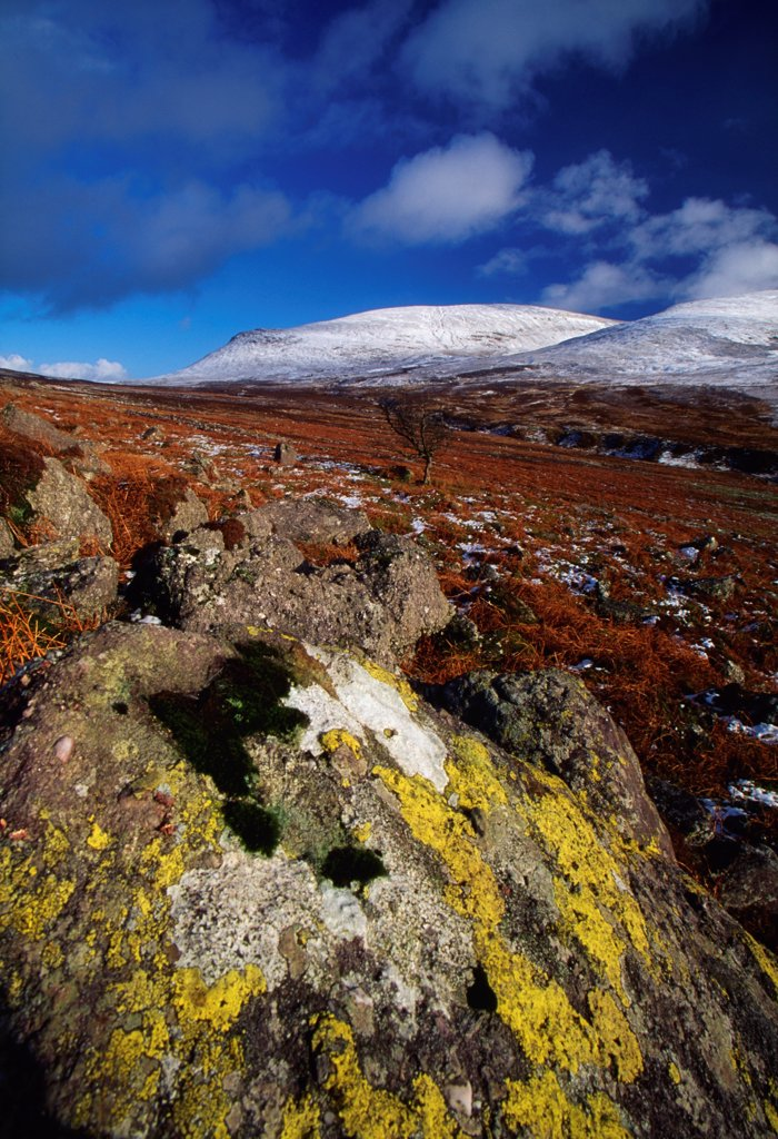 Stock Photo: 1812-16717 Nire Valley, County Waterford, Ireland; Lichens On Rock