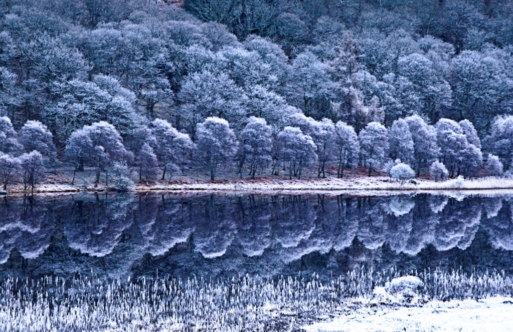 Glendalough National Park, County Wicklow, Ireland; Winter Lake With Hoar Frost : Stock Photo