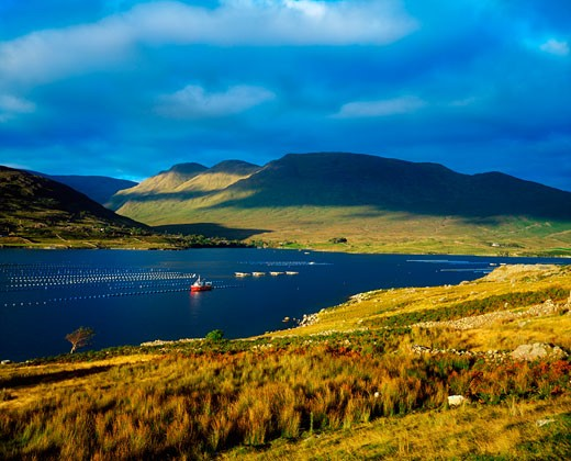 Stock Photo: 1812-1760 Fish Farm (mussels), Killary Harbour, Co Galway, Ireland
