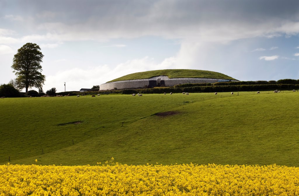 Stock Photo: 1812-18495 Rapeseed Field Surrounding The Monument At Newgrange, County Meath, Ireland