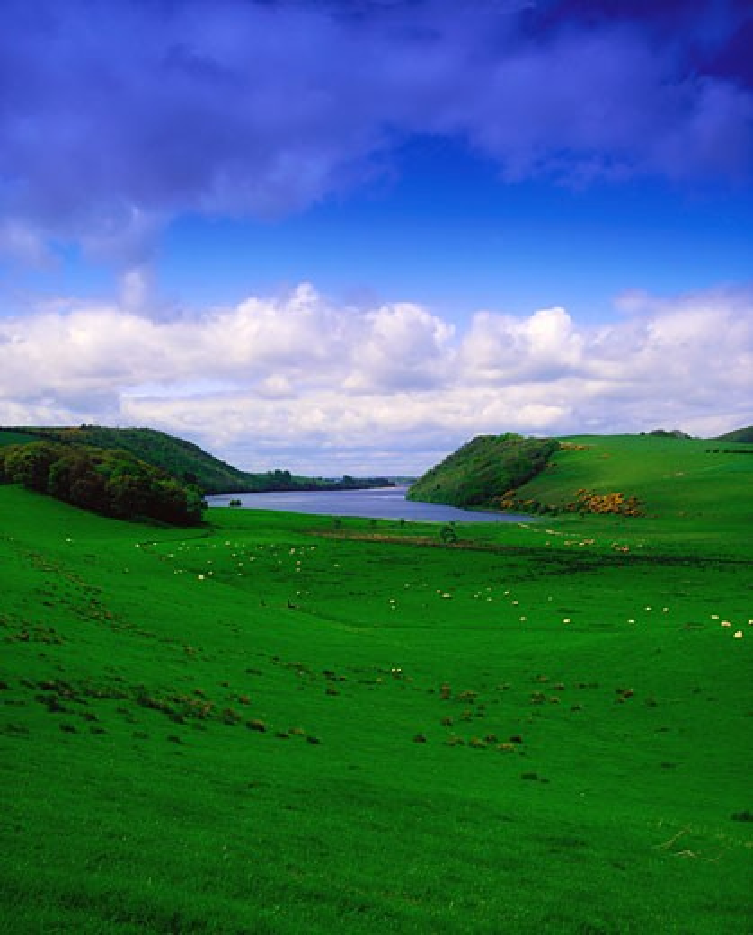 Co Westmeath, Lough Derravaragh : Stock Photo