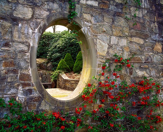 Mount Congreve Co Waterford, Moon Window and Chaenomeles, Early Spring : Stock Photo