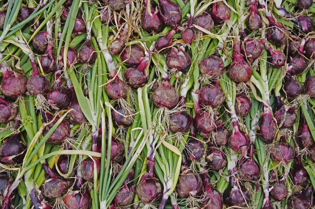Stock Photo: 1812-6109 Lismore Castle, County Waterford, Ireland; Organic onions