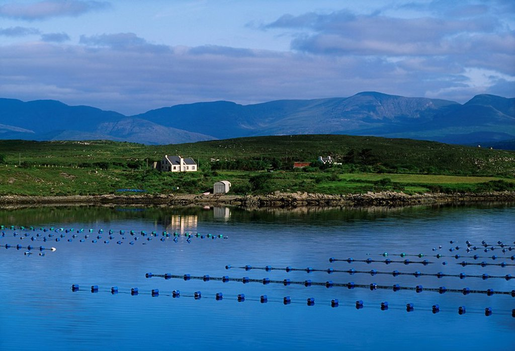 Stock Photo: 1812-7014 Industrial Fishing, Mussel Farm, Beara, Co Cork
