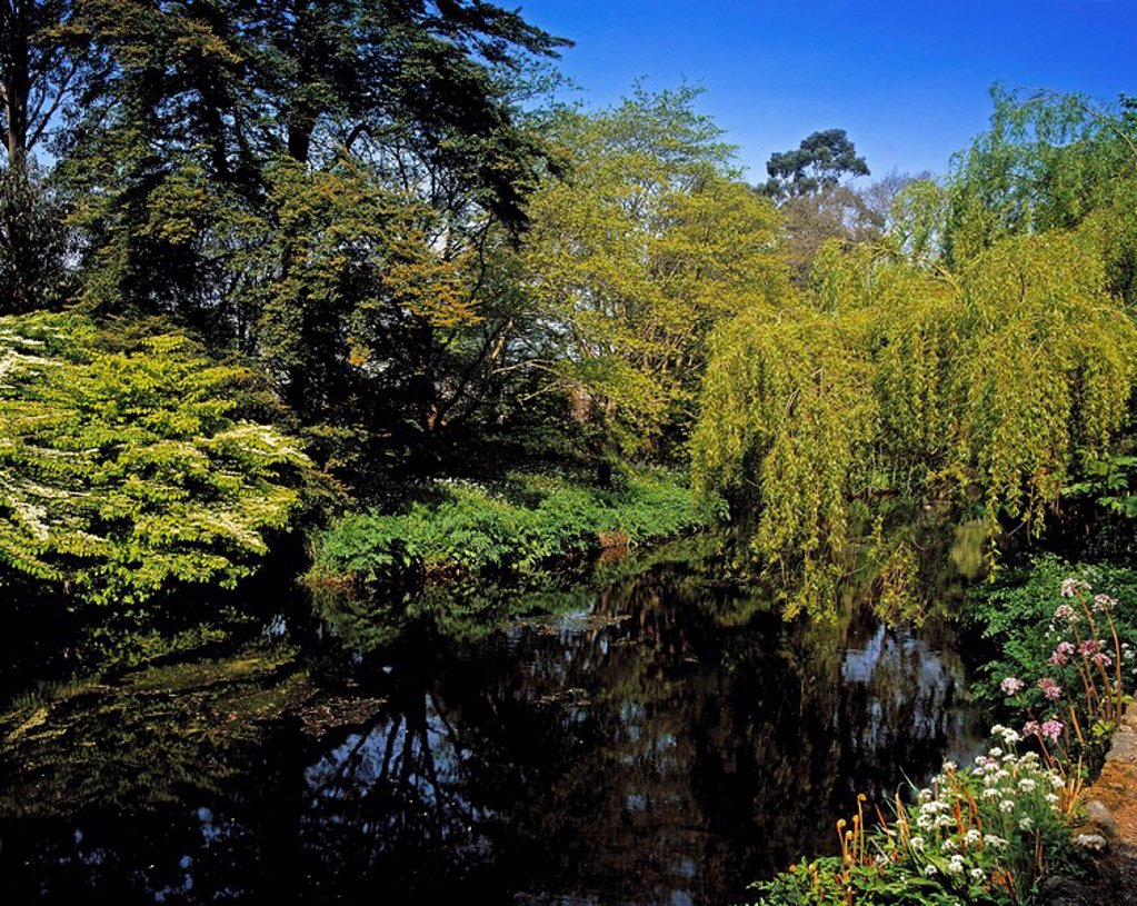 Stock Photo: 1812-7500 Vartry River, Mount Usher Gardens, Co Wicklow, Ireland, Willow trees and Viburnum Plicatum