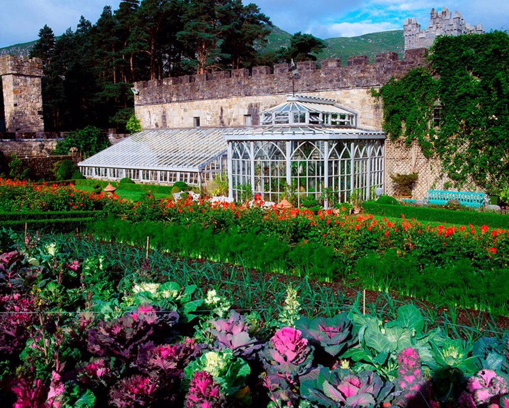 Stock Photo: 1812-7901 Glenveagh Castle, Co Donegal, Ireland, Walled Potager, Orangery, Dahlias and Cabbage