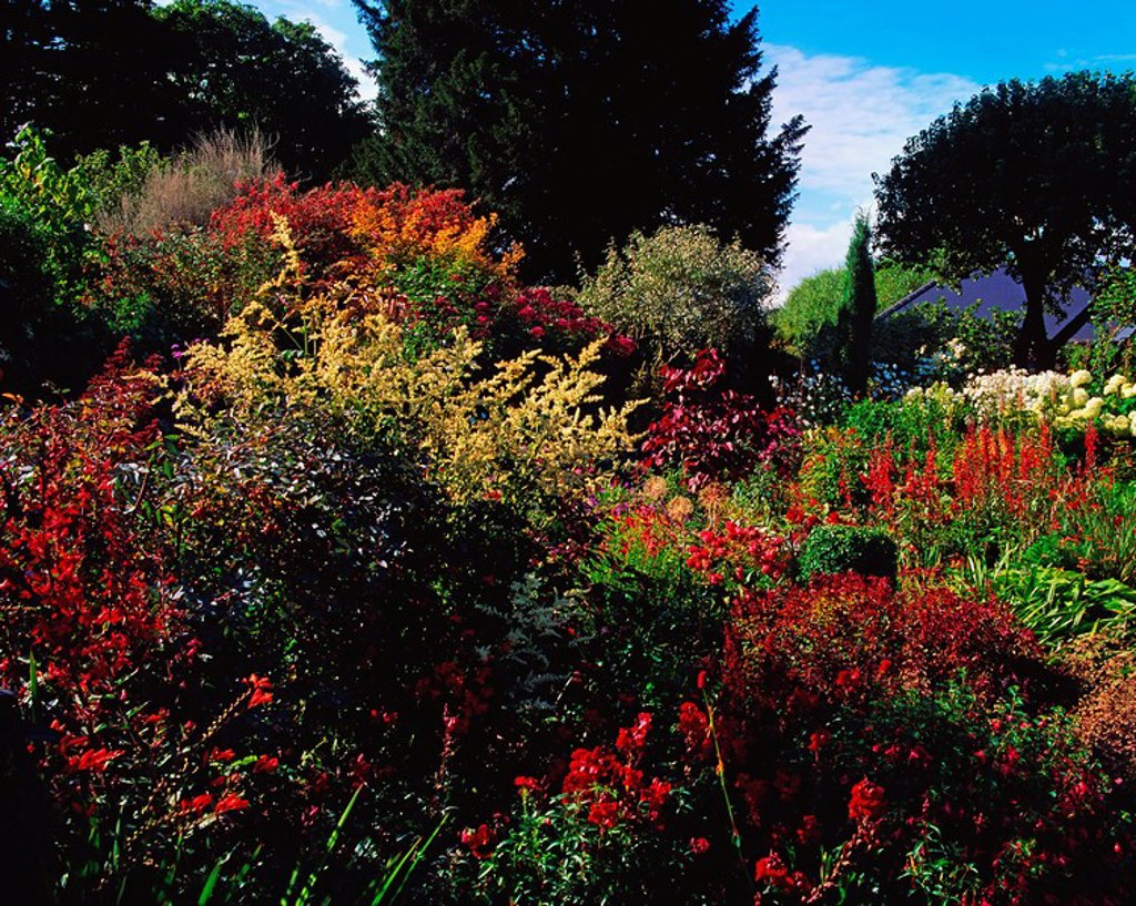 Sandford Road, Dublin, Co Dublin, Ireland, Herbaceous border : Stock Photo