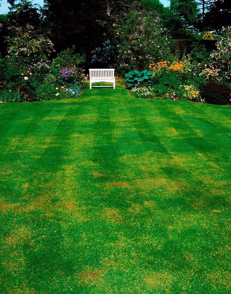 Stock Photo: 1812-8175 Knockree, Co Dublin, Ireland, Front lawn with a herbaceous border