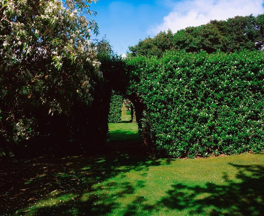 Greenfort, Co Donegal, Ireland, Escallonia hedges and arch during Summer : Stock Photo