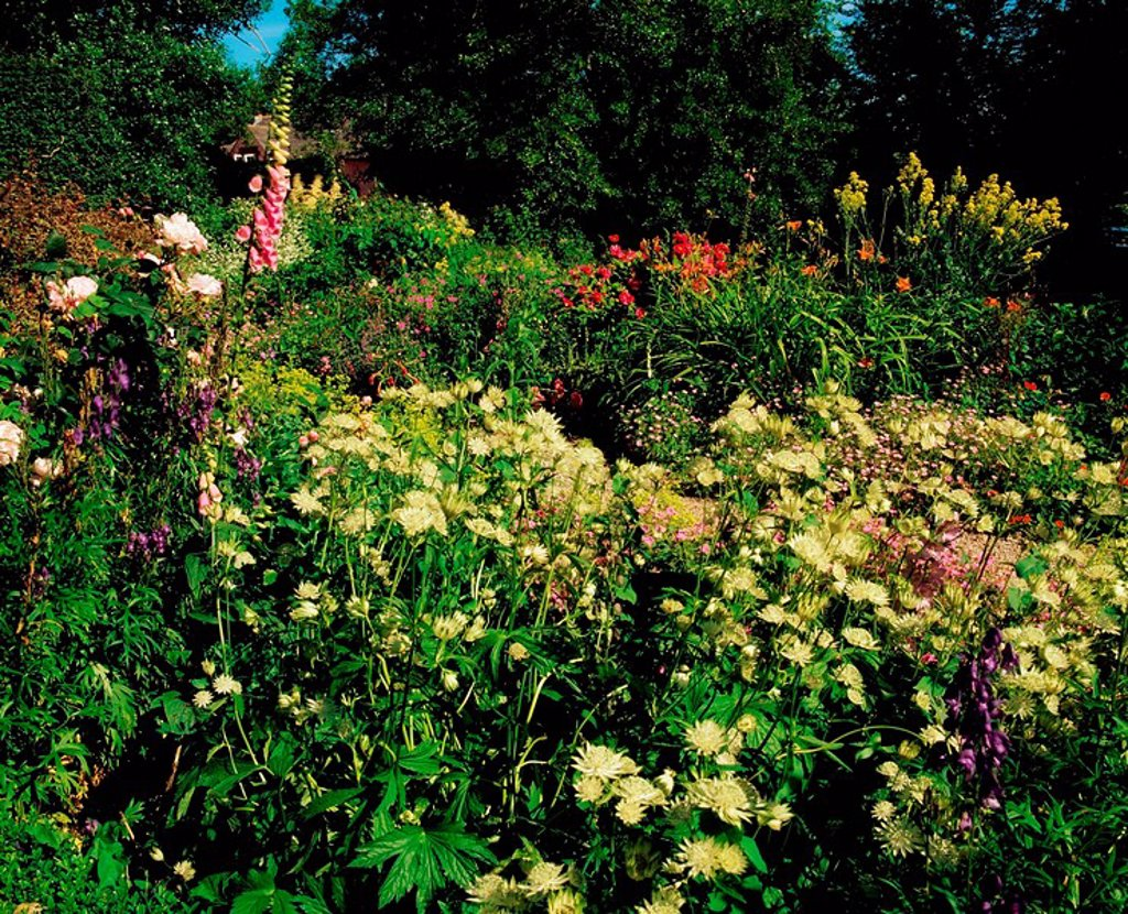 Kinoith House Gardens, Co Cork, Ireland, Herbaceous border : Stock Photo