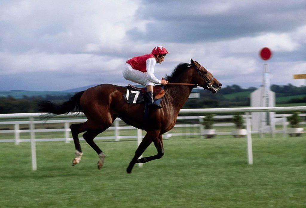 Naas, Co Kildare, Ireland, Horse racing : Stock Photo