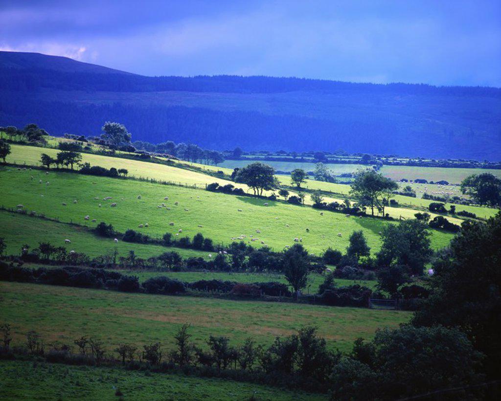 Pastoral, Cushendall, Co Antrim, Ireland : Stock Photo