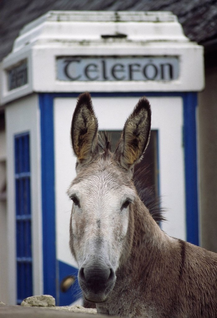 Stock Photo: 1812R-15143 Donkey By Telephone Booth, Glenbeigh, County Kerry, Ireland