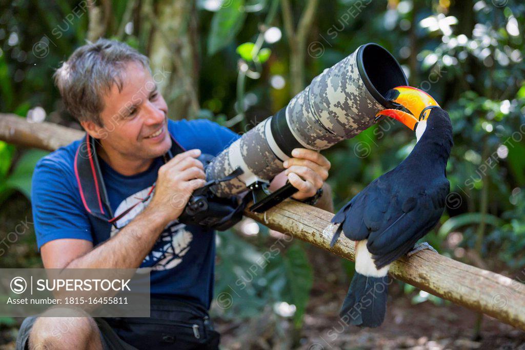 Stock Photo: 1815-16455811 Brazil, Mato Grosso, Mato grosso do Sul, common toucan, Ramphastos toco, nibbling at camera of a photographer
