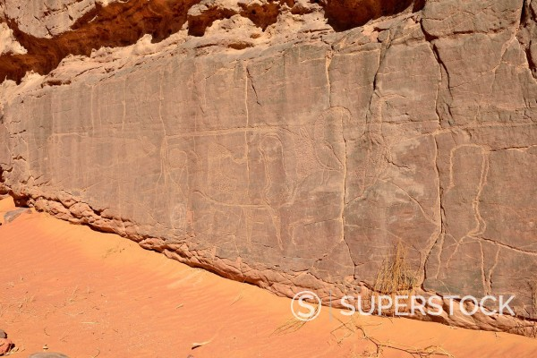 North Africa, Sahara, Algeria, Tassili N'Ajjer National Park, Tadrart, neolithic rock art, rock engraving of cows and bulls : Stock Photo