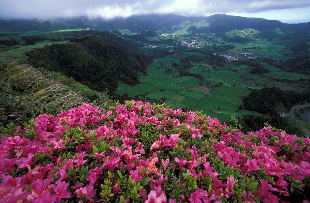 Stock Photo: 1815-37947 Valley of Furnas, Sao Miguel, Azores
