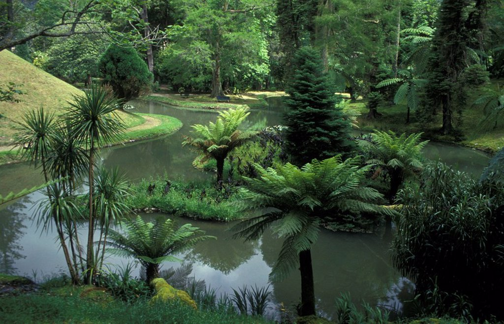 Terra Nostra Park, Furnas, Azores : Stock Photo