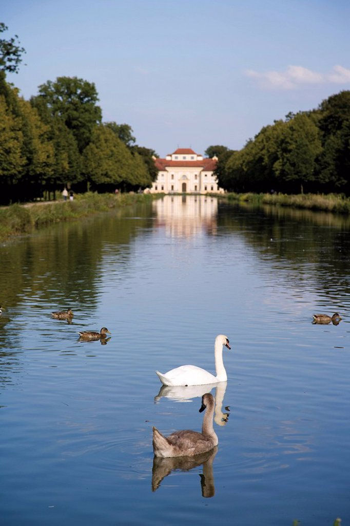 Germany, Bavaria, Swimming swans and ducks in front of Palace Lustheim : Stock Photo