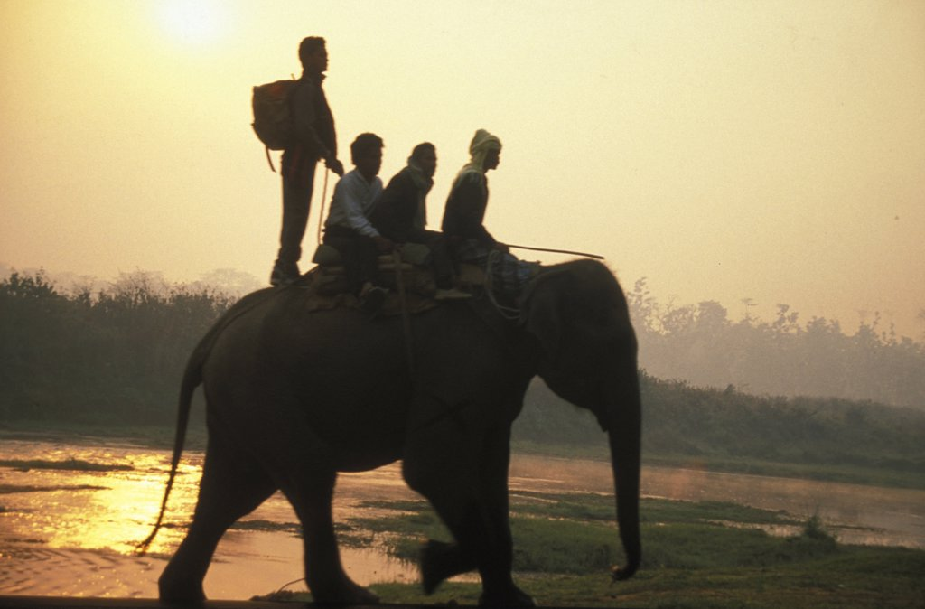 Stock Photo: 1815-38988 Sunrise, Chitwan Park, Nepal