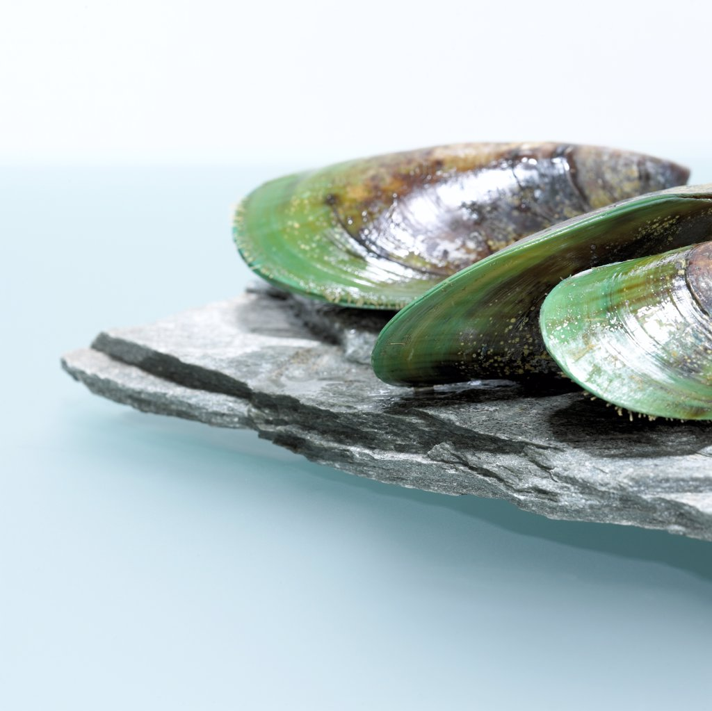 Stock Photo: 1815-40312 Green lipped mussels (Perna canaliculus), close-up close-up