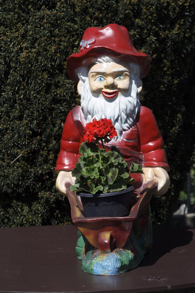 Garden gnome, outside, close-up : Stock Photo