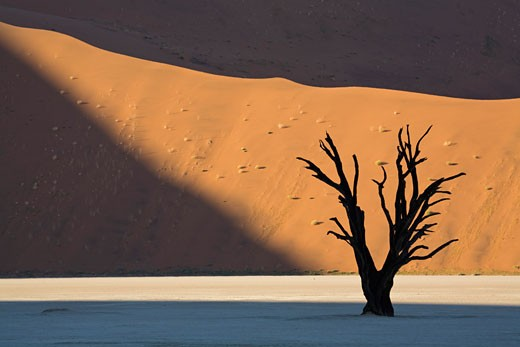 Africa, Namibia, Deadvlei, Dead trees : Stock Photo