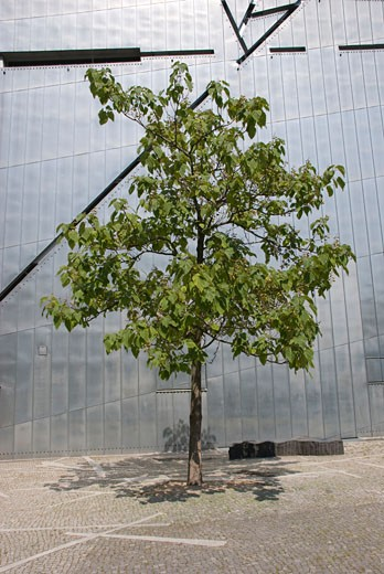 Stock Photo: 1815-47864 Germany, Berlin, Jewish Museum, tree in the foreground