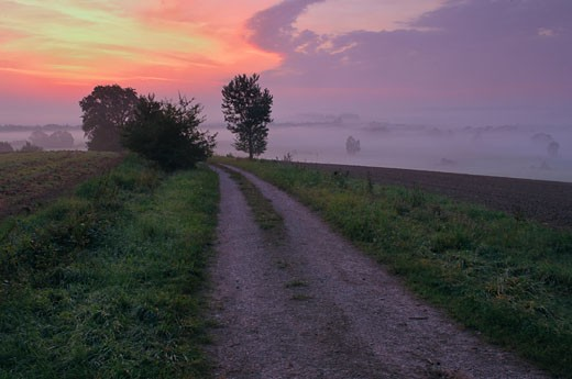 Germany, Field path at dawn : Stock Photo