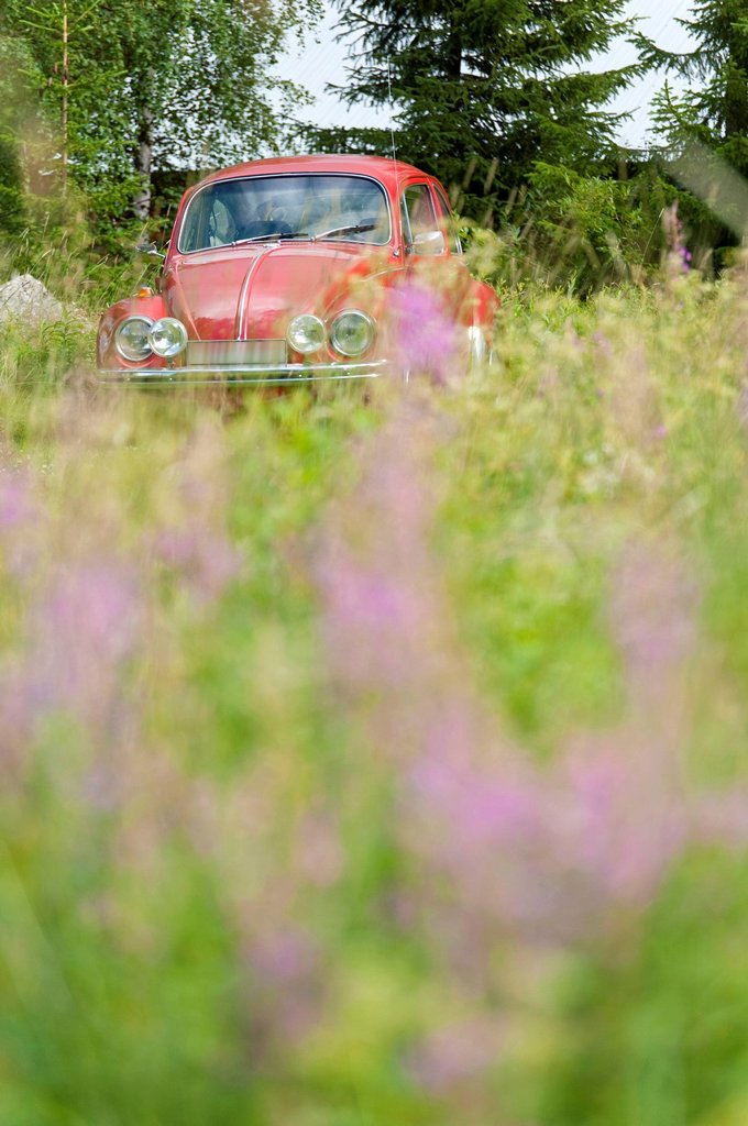 Stock Photo: 1815-88952 Sweden, Lapland, Car within a flowering meadow in Kvikkjokk
