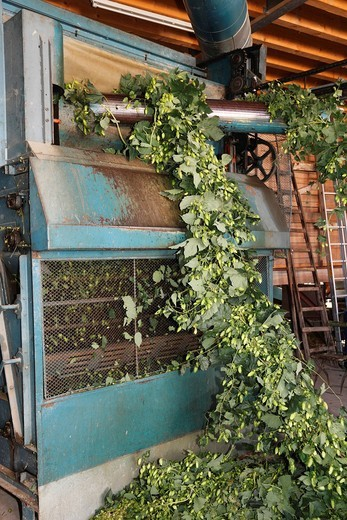 Germany, Upper Bavaria, Hollerdau, Holledau, Hallerdau, Culling machine of hop : Stock Photo