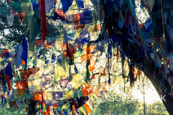 Nepal, Prayer flags in Lumbini : Stock Photo