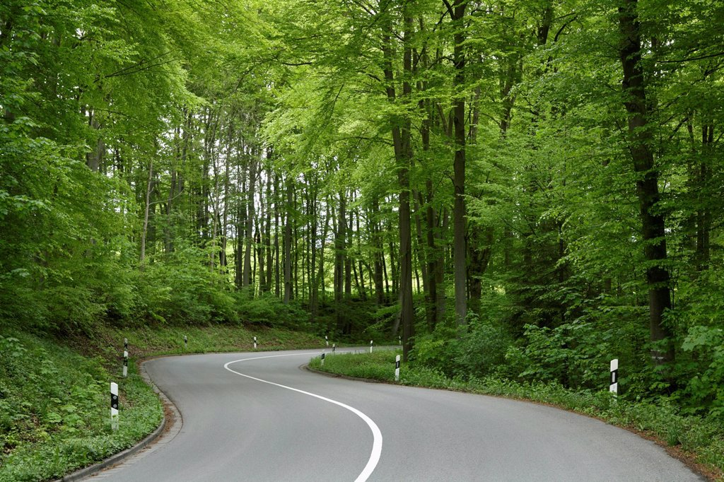 Stock Photo: 1815R-104111 Germany, Bavaria, Empty road through boardleaf forest