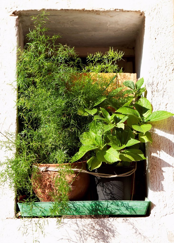 Stock Photo: 1815R-104133 Italy, Province of Venice, Flowerpot on window, close up