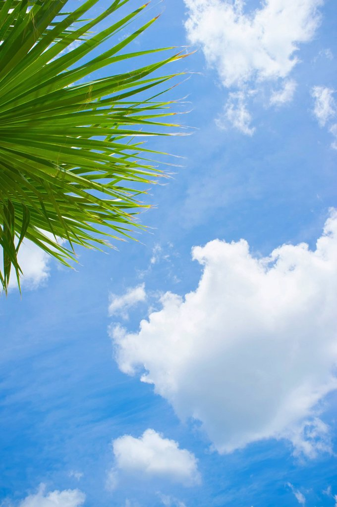Stock Photo: 1815R-111907 USA, Texas, Palm tree leaves against partly cloudy sky at Rio Frio