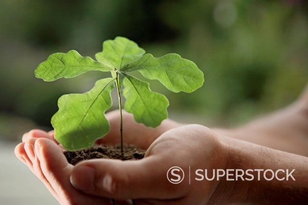 Stock Photo: 1815R-113778 Germany, Bavaria, Oak seedling in human hand