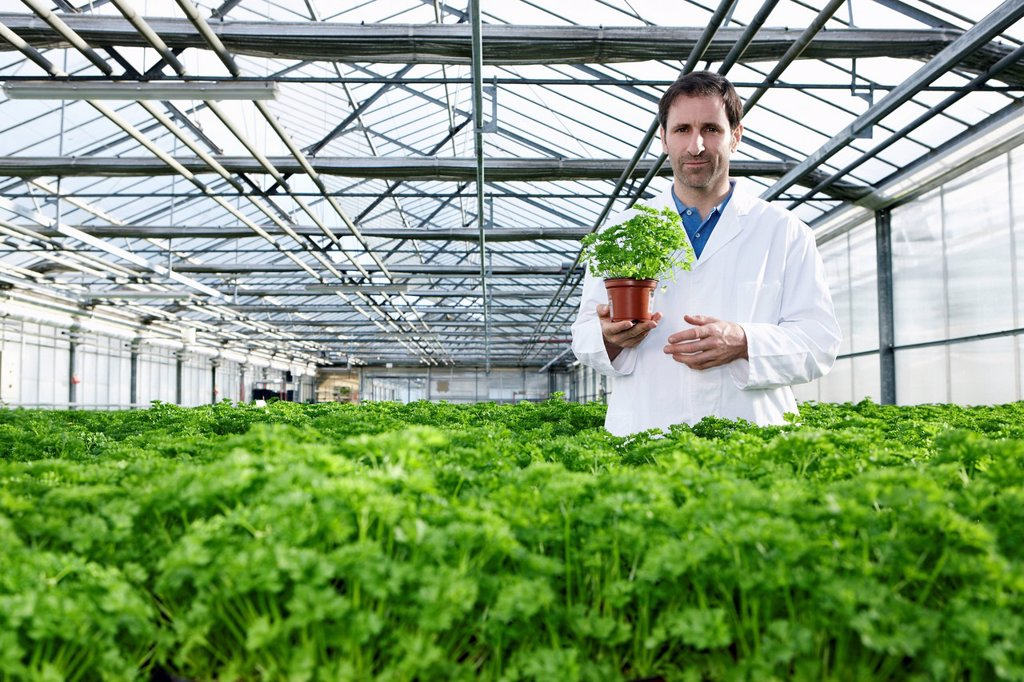 Stock Photo: 1815R-114561 Germany, Bavaria, Munich, Scientist standing between parsley plant in greenhouse